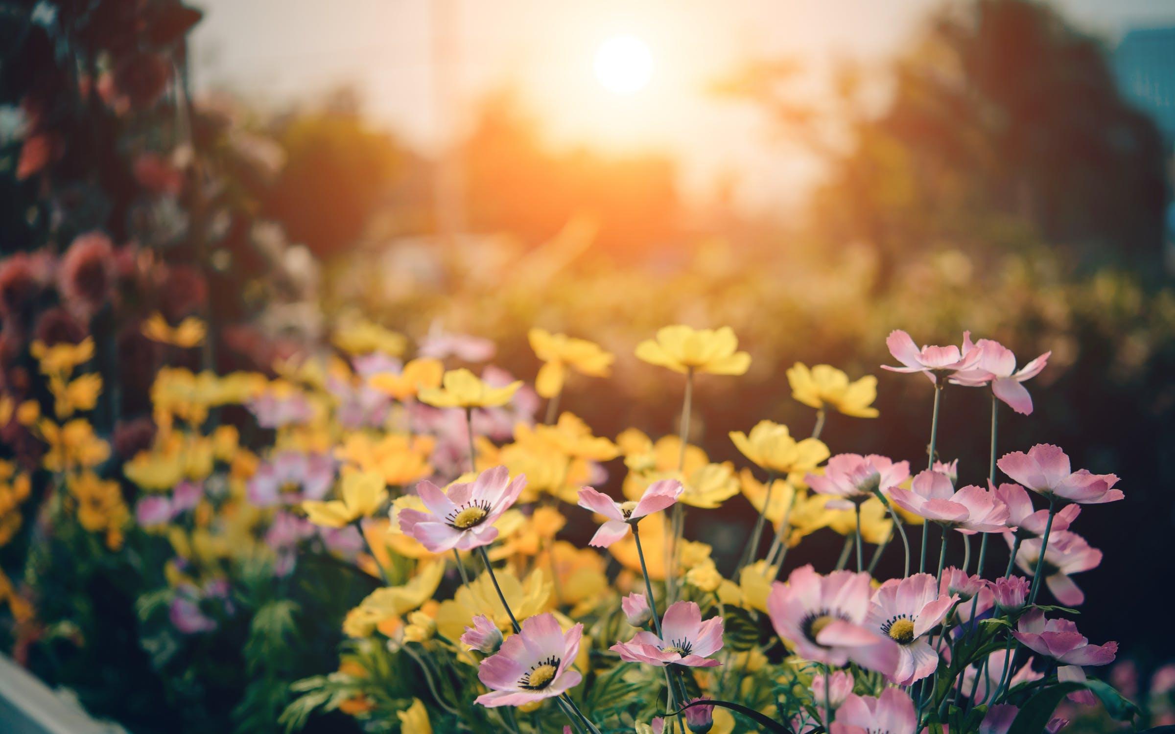Tuinplanten verzorgen