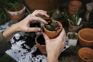 cactus verzorgen