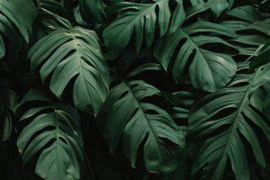 gatenplant verzorgen